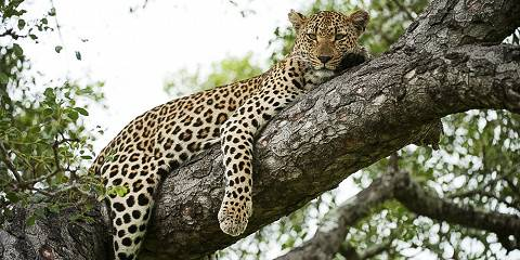 3-Day Private Kruger National Park Safari