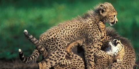 11-Day Sabi Sand, Kruger, Swaziland and Beach Safari
