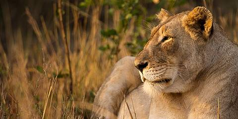 4-Day Fly in Big Cat Safari to the Greater Kruger