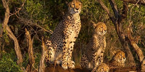 11-Day Samburu, Mara and the Sea