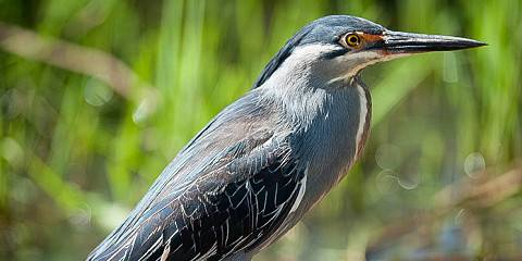 1-Day Birding Trip - Kruger National Park and Surrounds
