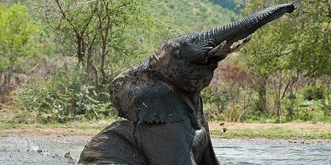 4-Day Big 5 Traditional Safari--Manyaleti/Greater Kruger