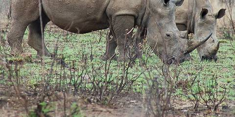 4-Day Big Five in Serengeti & Ngorogoro, All Inclusive