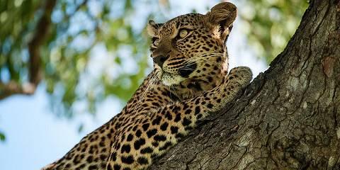 Explore Cape Town, Kruger & Victoria Falls