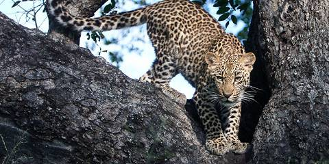 5-Day North & South Essential Sabi Sands — All Inclusive