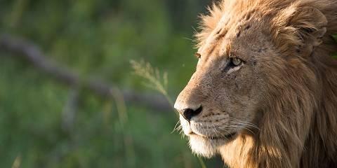 3-Day Budget South African Kruger Park Safari