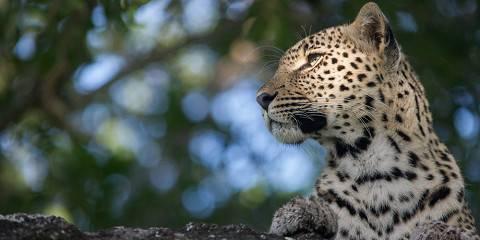 3-Day 5 Star Luxury Kruger Park Safari