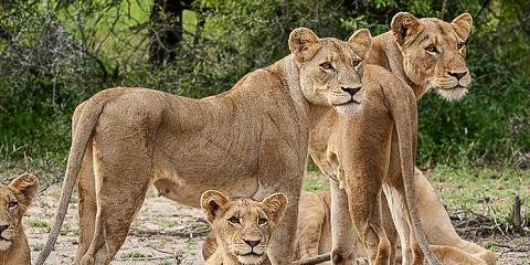 5-Day Tanzania Big Five