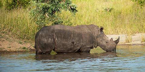 4-Day Rhino Conservation Safari
