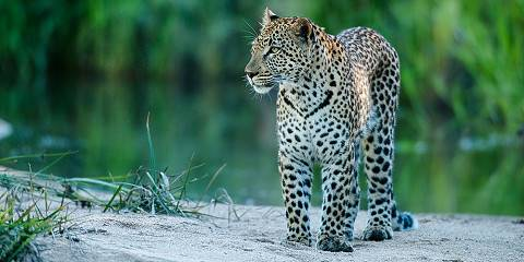 Kruger Wildlife Safari