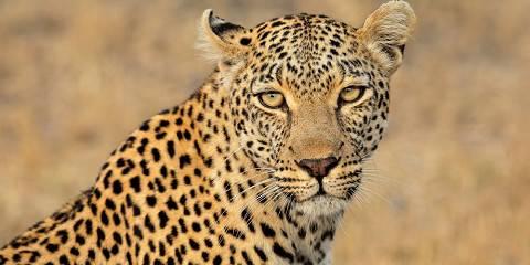 3-Day Affordable Sabi Safari