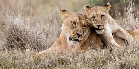 6-Day Big 5 Safari + Hiking the Drakensberg