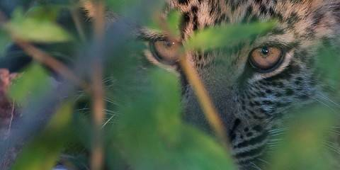 6-Day Off-Suite Kruger Safari from and to Johannesburg