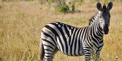 10-Day Tanzania Wildife and Migration Safari