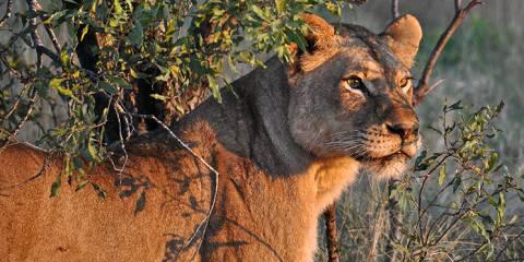 3-Day Entabeni Nature Conservancy Tour