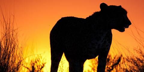 ½-Day Kruger National Park Morning Safari