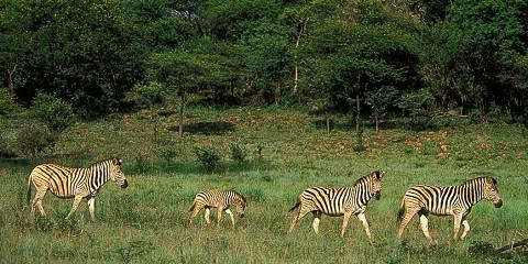 3-Day Masai Mara Kenya Adventure Joining Safari