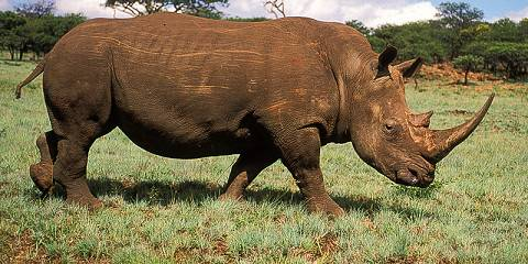 4-Day Camping Safari L Manyara, Ngorongoro and Serengeti