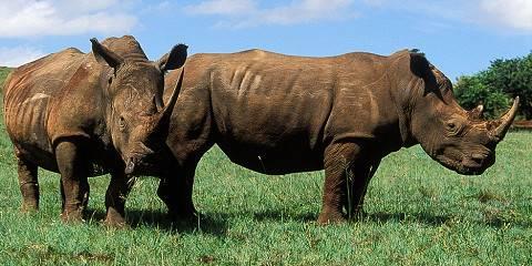 3-Day Kruger National Park Private Reserve Safari