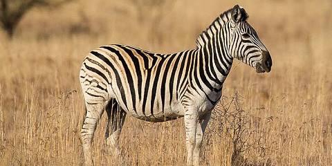 5-Day Tanzania Budget Lodge Safari- Tanzania Safari Tour