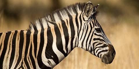 3-Day Etosha - Wildlife Kingdom