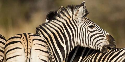3-Day Kruger National Park Luxury South Africa