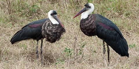 4-Day Selous Wildlife Safari