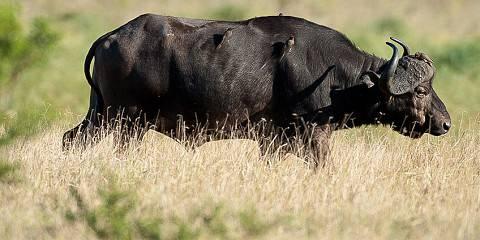 9-Day Southern Tanzania Safari Selous/Mikumi & Ruaha NP