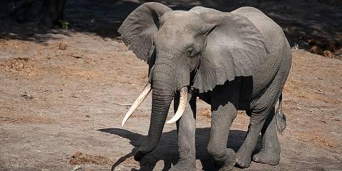 15-Day Uganda & Rwanda Gorilla Safari