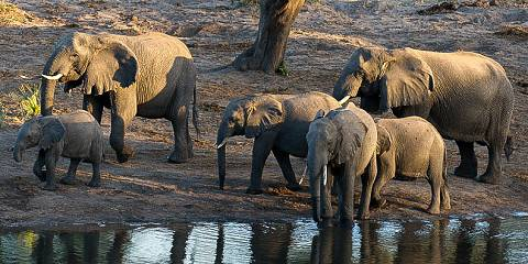 11-Day Private Kruger National Park - North to South