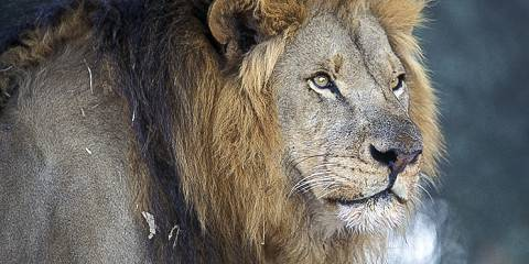 3-Day Big 5 Traditional Safari--Manyaleti/Greater Kruger