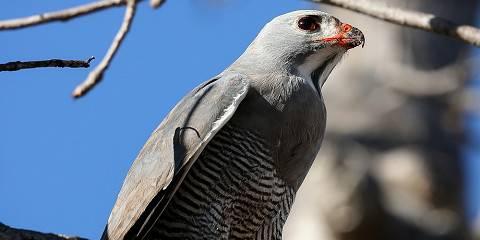 8-Day Birding Safari Uganda and Wildlife Tour