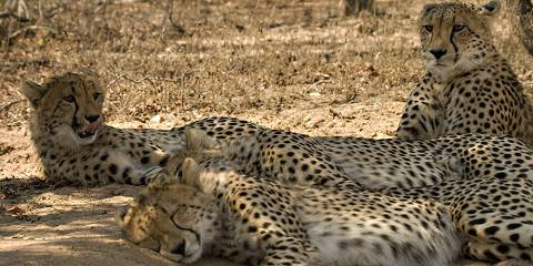 3-Day Kgalagadi Safari
