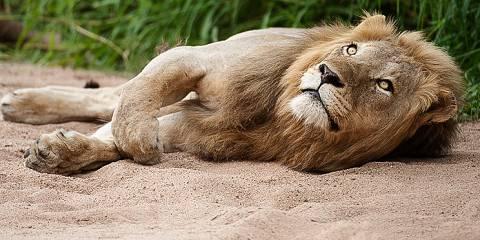 3-Day Luxury Lodge Safari