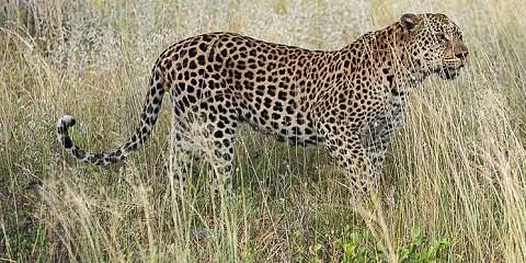 5-Day Greater Kruger Safari in South Africa