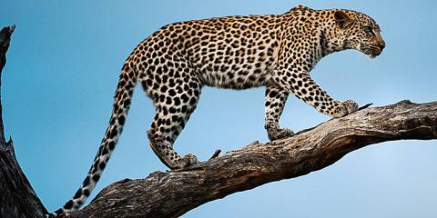 7-Day Kruger Open Safari Vehicle Adventure