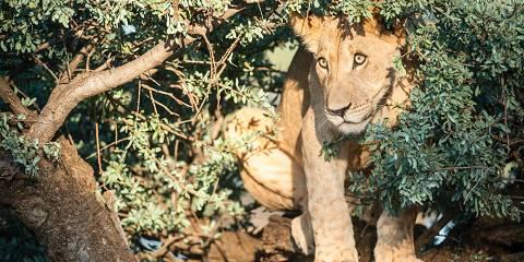 4-Day Affordable Family Kruger Wildlife Safari