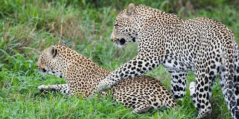 7-Day Honeymoon Mid-Range Tarangire Crater Serengeti