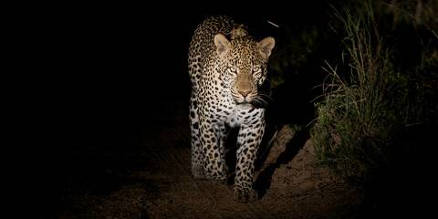 5-Day Exclusive Kruger & Private Game Reserve Experience