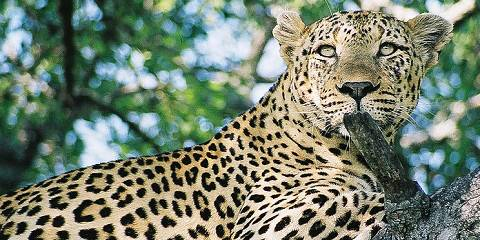 4-Day Complete Kruger Park and Panoramic Tour Experience