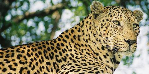 3-Day Essence of the Kruger Safari