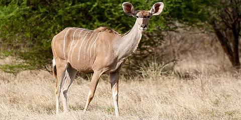 6-Day Sun City & Pilanesberg Safari