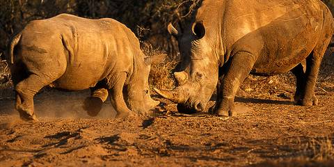 1-Day Best Full Day Big Five Safari from Johannesburg