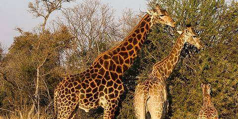 4-Day Kruger Park & Private Safari Lodge