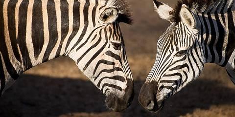 8-Day Kruger & Mozambique