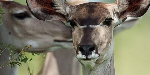 4-Day Eastern Cape Safari with Pumba Msenge Bush Lodge