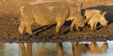 5-Day Affordable Greater Kruger Game Lodge Safari
