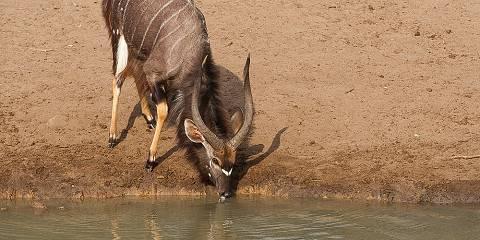 6-Day Uganda Primate Safari and Wildlife Tour