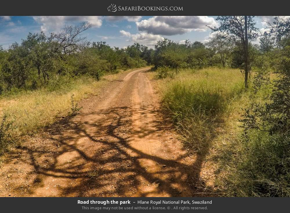 Road through the park in Hlane Royal National Park, Swaziland