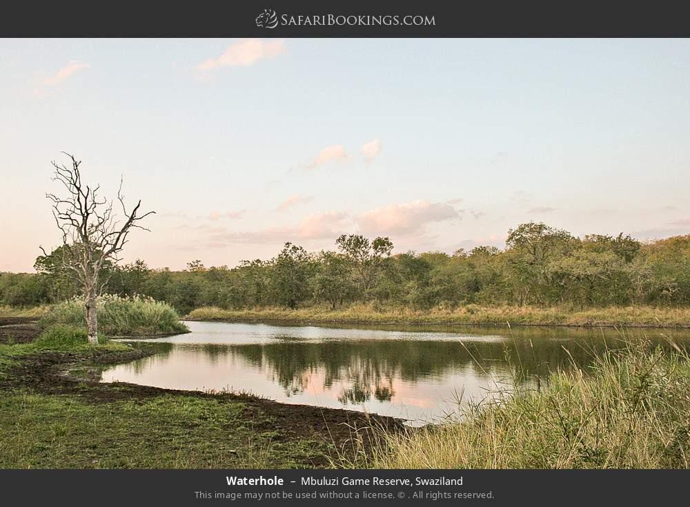 Waterhole in Mbuluzi Game Reserve, Swaziland